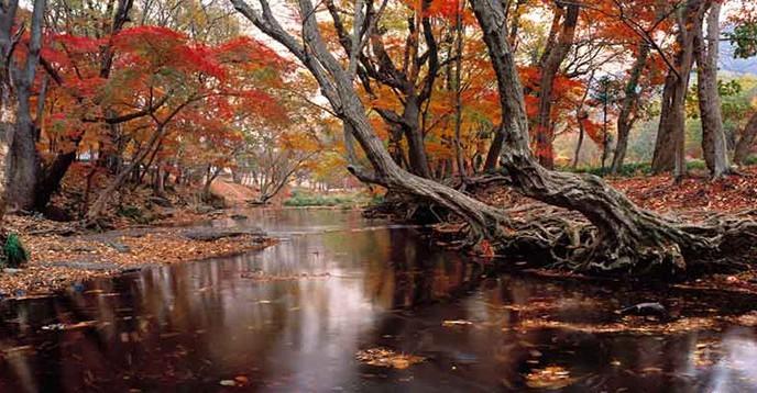 © UNESCO/Gochang Biosphere Reserve